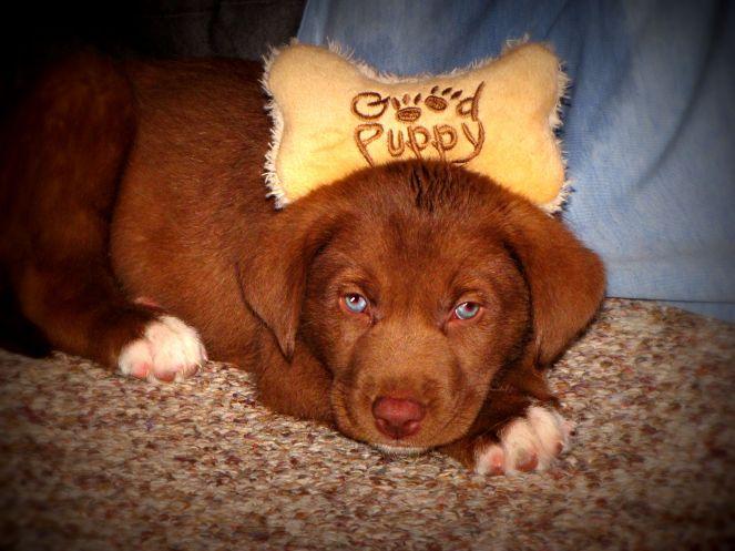 puppy 3 - lomo